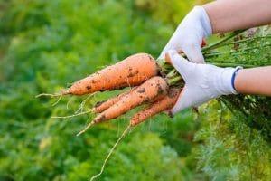Ăn cà rốt sống có giảm cân không? Câu trả lời lời bất ngờ từ chuyên gia
