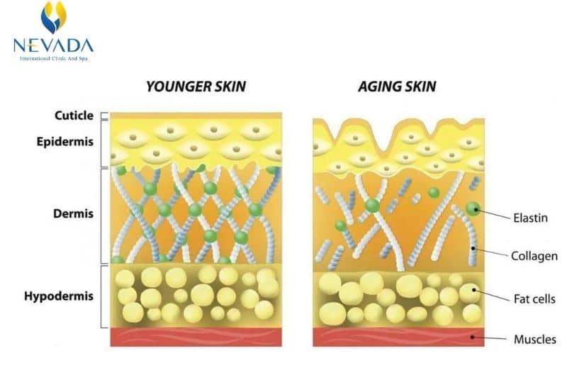 ma trận ngoại bào, liệu trình ma trận ngoại bào, ma trận ngoại bào full face, dịch vụ ma trận ngoại bào full face, liệu trình làm đẹp ma trận ngoại bào