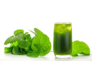 Uống nước rau má có giảm mỡ được không? 5 Cách giảm cân bằng rau má cấp tốc trong 2 tuần