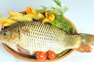 Ăn cá chép có béo không? Chuyên gia tiết lộ 100g cá chép chứa bao nhiêu calo?