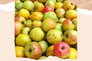 Ăn táo mèo có giảm cân không? Học lỏm cách giảm cân bằng táo mèo, giảm ngay và luôn 2-3kg sau 1 tháng