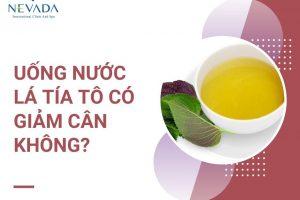 Uống nước lá tía tô có giảm cân không? Cách giảm cân bằng nước lá tía tô cực kì thần kỳ với nước lá tía tô
