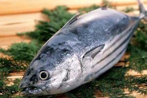100g cá ngừ có chứa bao nhiêu calo? Ăn cá ngừ có béo không? Chuyên gia dinh dưỡng giải đáp