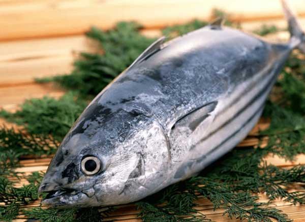 cá ngừ bao nhieu calo, ăn cá ngừ đóng hộp có béo không, 100g cá ngừ bao nhiêu calo, cá ngừ bao nhiêu calo, cá ngừ hộp bao nhiêu calo, cá ngừ ngâm dầu bao nhiêu calo, cá ngừ đóng hộp bao nhiêu calo, cá ngừ kho bao nhiêu calo, ăn cá ngừ có béo không, cá ngừ có bao nhiêu calo, calo trong cá ngừ, cá ngừ chiên bao nhiêu calo, calo cá ngừ, cá ngừ calo, calo trong cá ngừ ngâm dầu, 100g cá ngừ bao nhiều calo, cá ngừ chứa bao nhiêu calo, 100gr cá ngừ bao nhiêu calo, 100g cá ngừ có chứa bao nhiêu calo