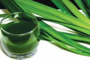 Uống trà sâm dứa có giảm cân không? Cách uống trà sâm sứa giảm cân hiệu quả