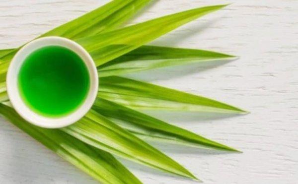 uống trà sâm dứa có giảm cân không, trà sâm dứa giảm cân, trà sâm dứa có giảm cân không